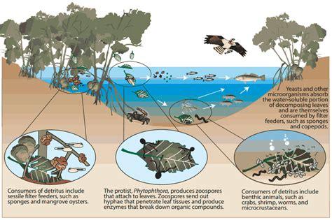 section 4 4 aquatic ecosystems aquatic ecosystems aquatic ecosystems in florida