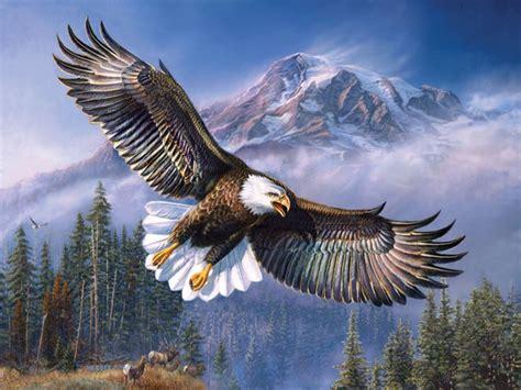 wallpaper elang keren gambar index wp content uploads 2016 03 gambar burung