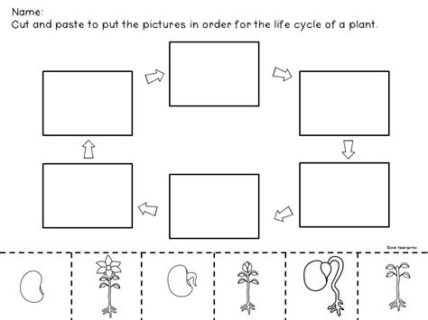 the cycle of a plant worksheet bean plant cycle worksheets