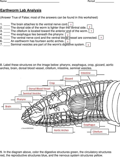 diagram of worm with label earthworm diagram with label similiar posterior diagram of