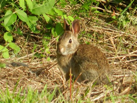 how to keep rabbits out of your backyard how to keep wildlife out of your yard install it direct