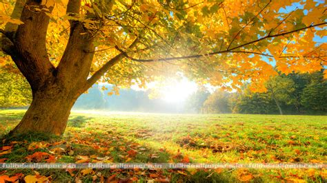 wallpaper full hd background nature tree full hd wallpapers