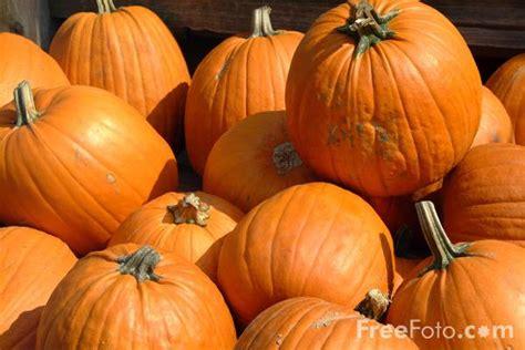 photos pumpkins pumpkins pictures free use image 09 21 2 by freefoto