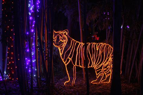 fresno chaffee zoo lights zoolights at the fresno chaffee zoo river
