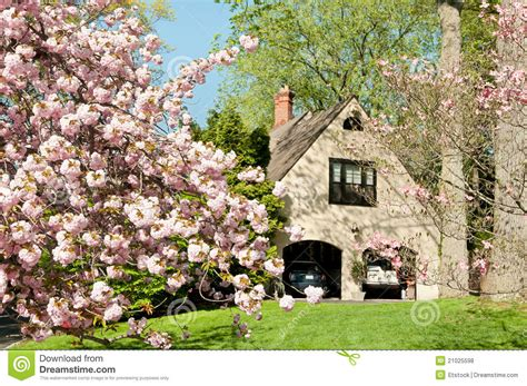 cherry tree family cherry tree in front of upscale family house royalty free stock photos image 21025598