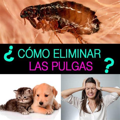 como eliminar las pulgas en casa c 243 mo eliminar las pulgas de tu hogar y mascotas la gu 237 a