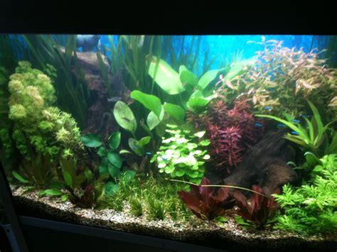 aquarium tropical plants aquarium plants true aquatic sets at aquarist classifieds