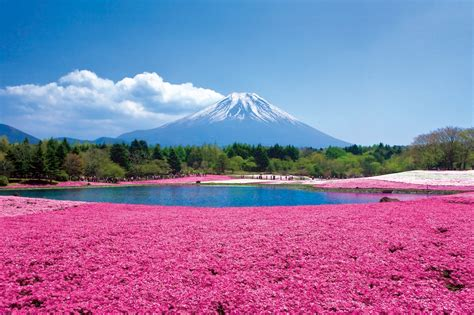 fuji pink miho no matsubara was added to the world heritage site as
