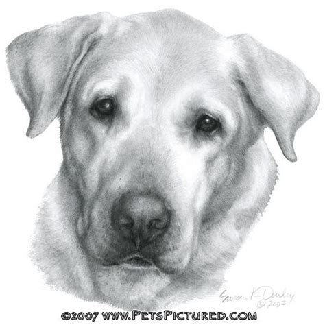 how to a lab puppy how to draw a labrador puppy step by step portrait of alex yellow labrador