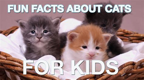 fun facts about cats for kids youtube