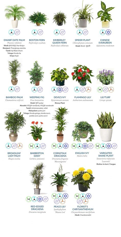 indoor plants  guarantee  purify  air