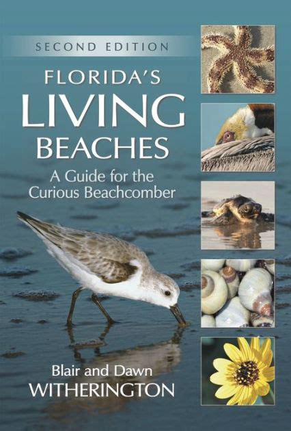 libro a curious guide to florida s living beaches a guide for the curious beachcomber by blair witherington dawn