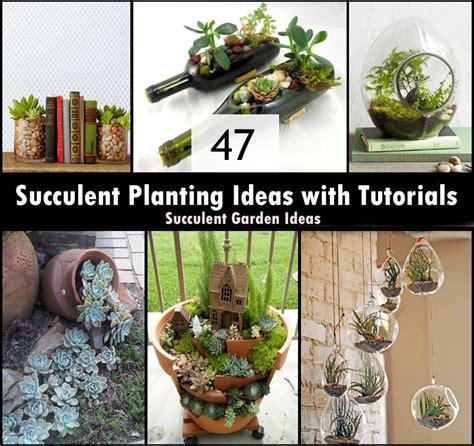 planting gardening ideas 47 succulent planting ideas with tutorials succulent