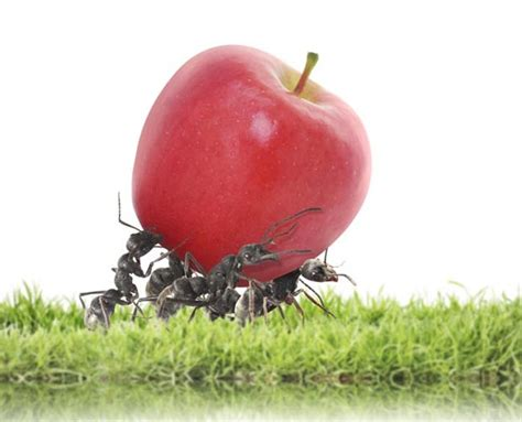Wie Wird Ameisen Los 3756 by Ameisen Im Zimmer So Wird Sie Los Quelle
