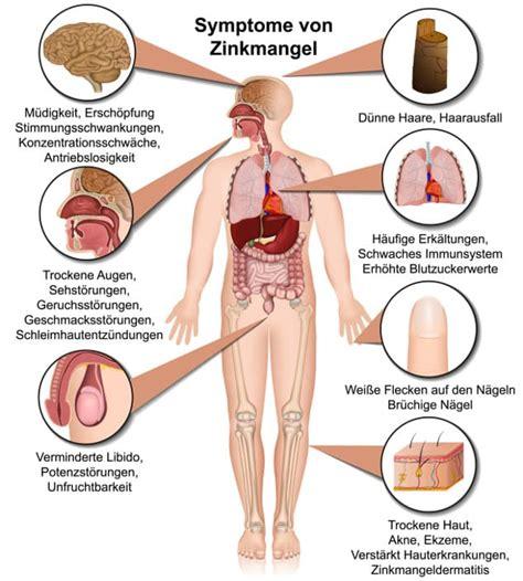 zinkbedarf decken zinkbedarf decken tabelle mit zinkhaltigen lebensmitteln