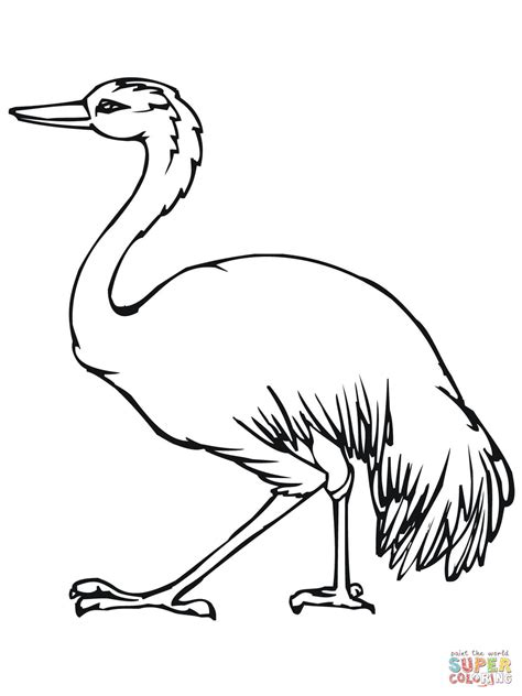 emu coloring page free emu the largest bird in australia coloring page free