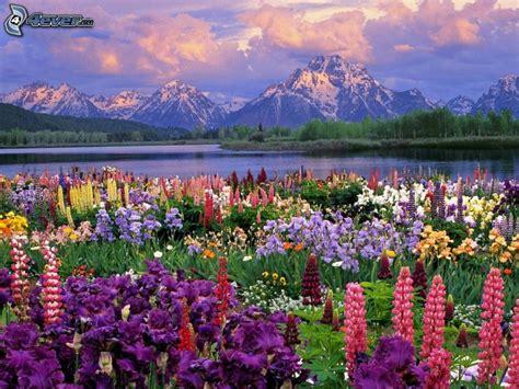 paesaggi di fiori fiori di primavera