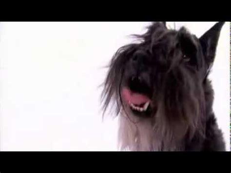 dogs 101 schnauzer schnauzer rankings opinions