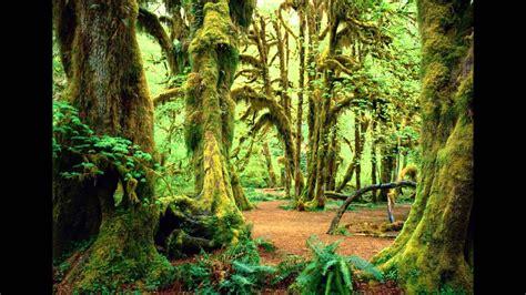 imagenes hot en 3d naturaleza bosques hd 3d arte y jardiner 237 a dise 241 o de
