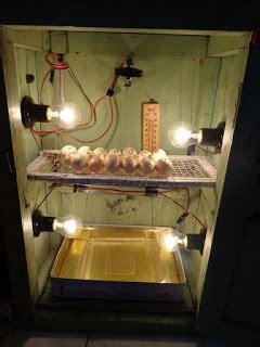 Alat Teropong Telur Ayam jhonna studio cara membuat mesin tetas incubator otomatis
