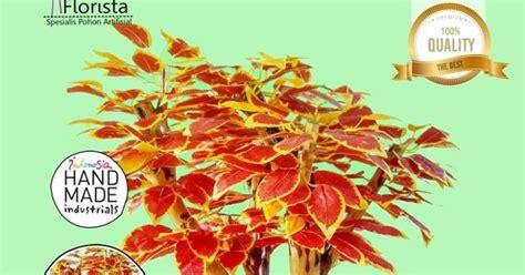 Jual Plastik Bogor jual pohon plastik murah di bogor hub 081281828256