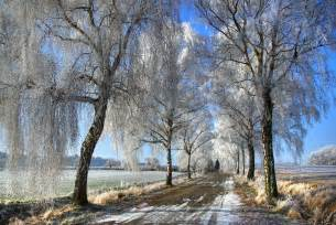 Winter Tree by Winter Trees Winter Photo 22173930 Fanpop
