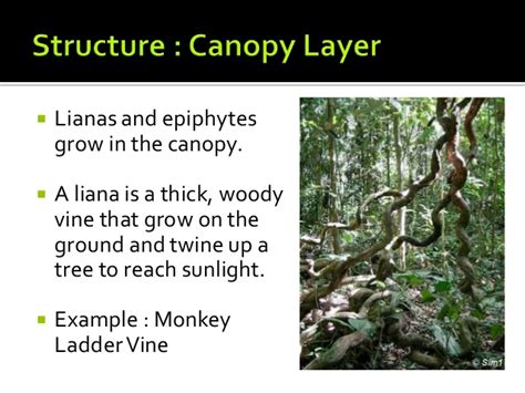 tropical forest plant adaptations tropical rainforests structure and adaptation