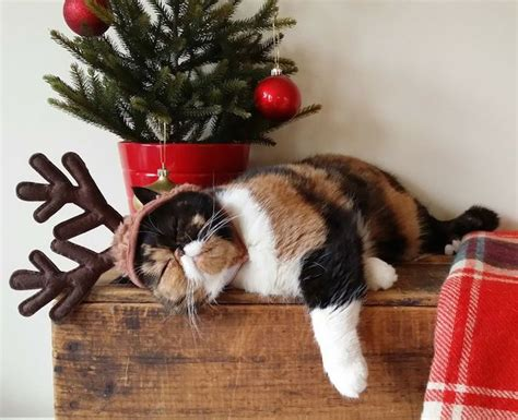 funny wayscto keep cats off christmas tree how to keep your cat safe styletails