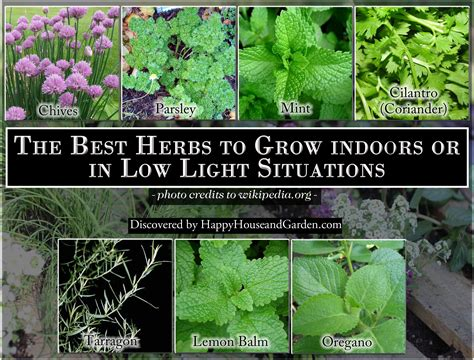 herbs  grow indoors    light situations