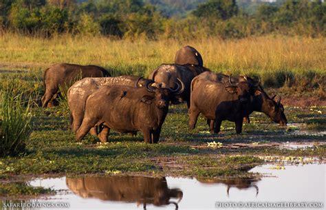 queen elizabeth national park uganda wildlife queen elizabeth national park travel guide map more