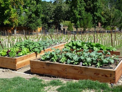 Building Vegetable Garden Beds Foods For Start Your Fall And Winter Vegetable