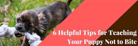 how do you your not to bite 6 helpful tips for teaching your puppy not to bite advice tips