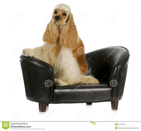 dog on the couch dog on the couch stock images image 27712744