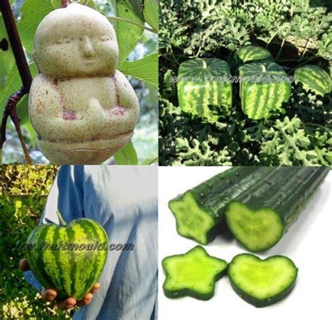 fruit molds grow buddha shaped pears square shaped watermelon