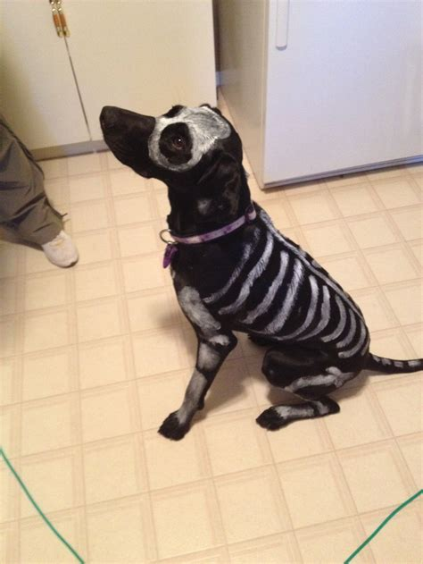 skeleton dog  toxic  washable paint  easy
