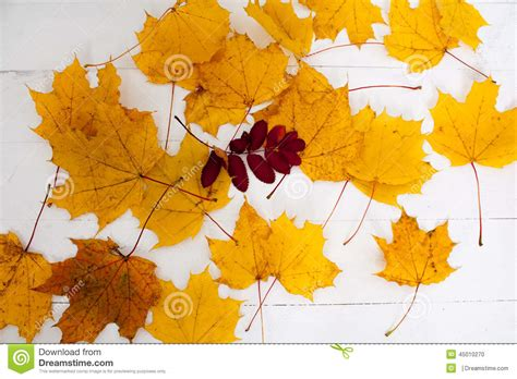 maple leaves autumn yellow paint stock photo image 45010270