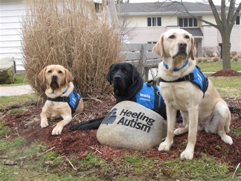 can dogs autism the ultimate guide to service dogs ib milwaukee industries for the blind