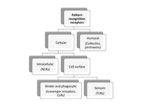 humoral pattern recognition receptors glycopedia