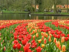 keukenhof tulip garden camille david s euro trip