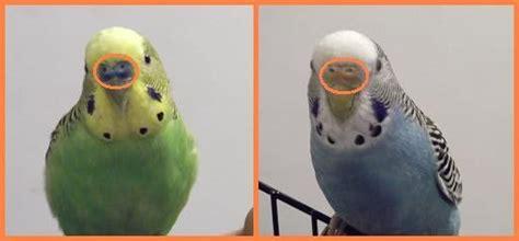 gabbia cocorita animal plus cocorite o pappagallini ondulati