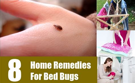 natural remedies for bed bugs 8 home remedies for bed bugs natural treatments cure
