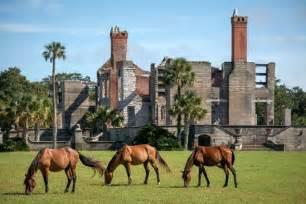 The Wild Horses of Georgia's Cumberland Island   WhereTraveler
