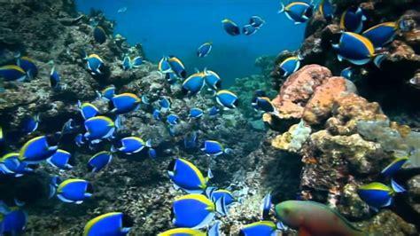 imagenes extraordinarias del mar canci 243 n anuncio ing direct cuenta naranja hay m 225 s peces