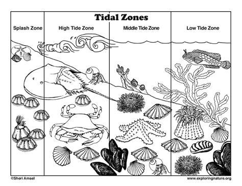 coloring book on tidal tidal coloring tidal coloring
