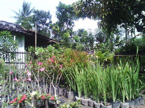 bibit buah tanaman hias gambar tanaman  tahan panas