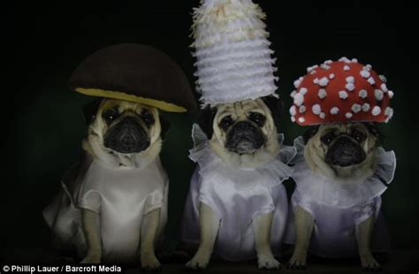 pug lord of the rings california dresses their pugs as lord of the rings characters because why not