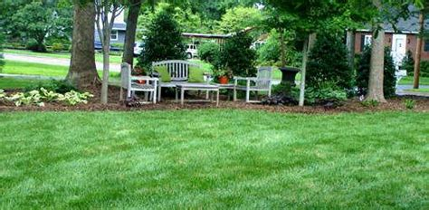 how to grow grass in backyard how to grow fescue grass in your yard today s homeowner