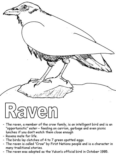 Ravens Coloring Pages coloring pictures of the ravens symbol coloring pages