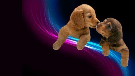 s puppies lieve puppy 180 s bureaubladachtergronden be