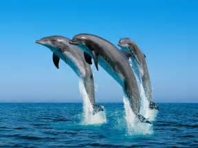 Beau Ordinateur Portable Bureau En Gros #6: Dolphins.jpg